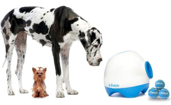 Ifetch для собак